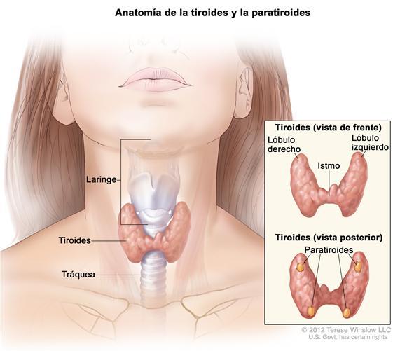 cancer de garganta