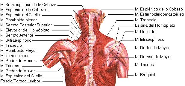 La crisis de la columna vertebral sheynogo del departamento del ejercicio